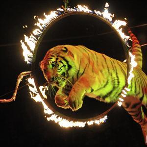 Цирки Измайлово