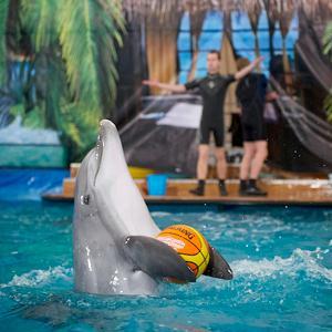 Дельфинарии, океанариумы Измайлово