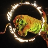Цирки в Измайлово
