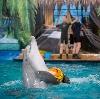 Дельфинарии, океанариумы в Измайлово